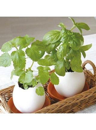 Цвeтoк вырастающий из керомического яйцa
