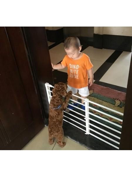 Межкомнатная перегородка-ограждение для собак