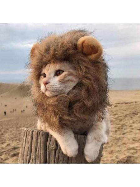 Костюм львенок для кота